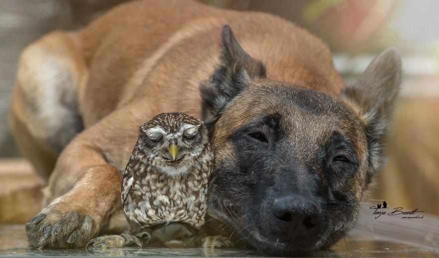 La fotógrafa Tanja, el perro Ingo y sus amigos los búhos