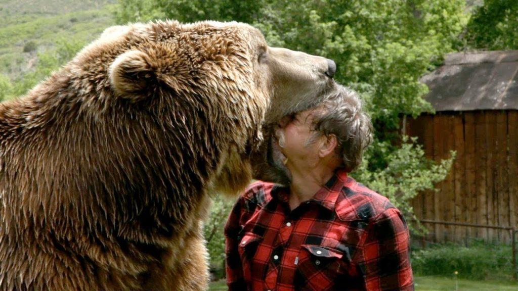 Oso grizzly saboreando a un humano