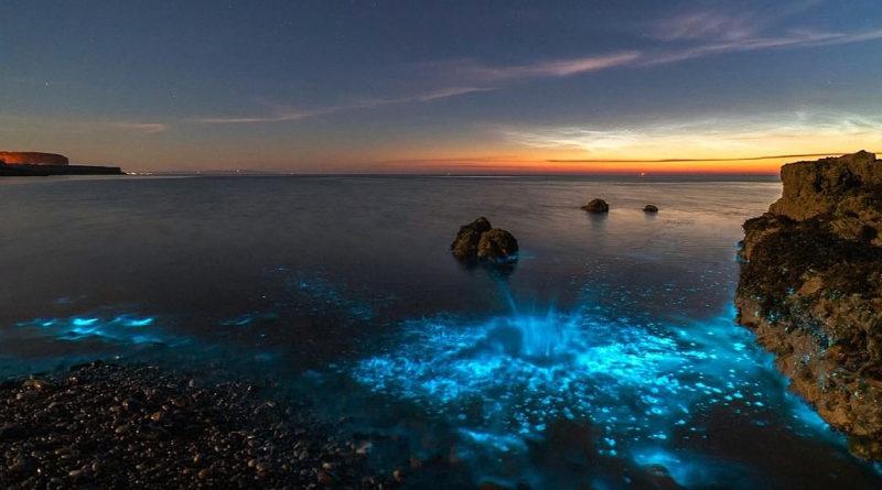 Bioluminiscencia en las costas de Gales