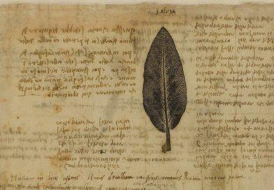 Citas de Leonardo da Vinci sobre ciencia y conocimiento